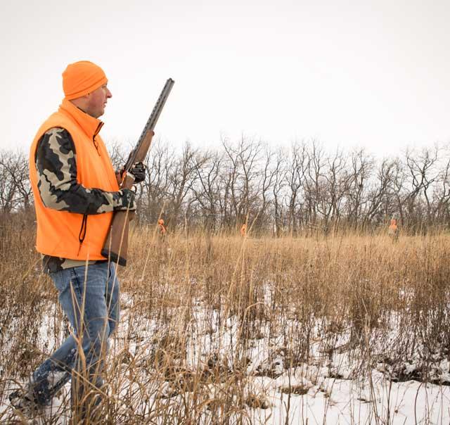 walking pheasant hunting